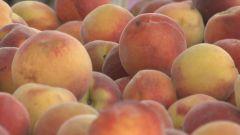 Peaches_4